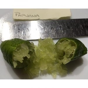 Papuana finger lime