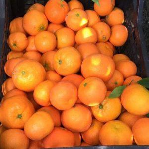 Mandarini di Sicilia