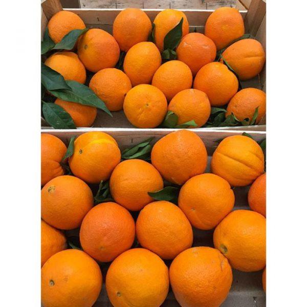 Arance Brasiliano da tavola